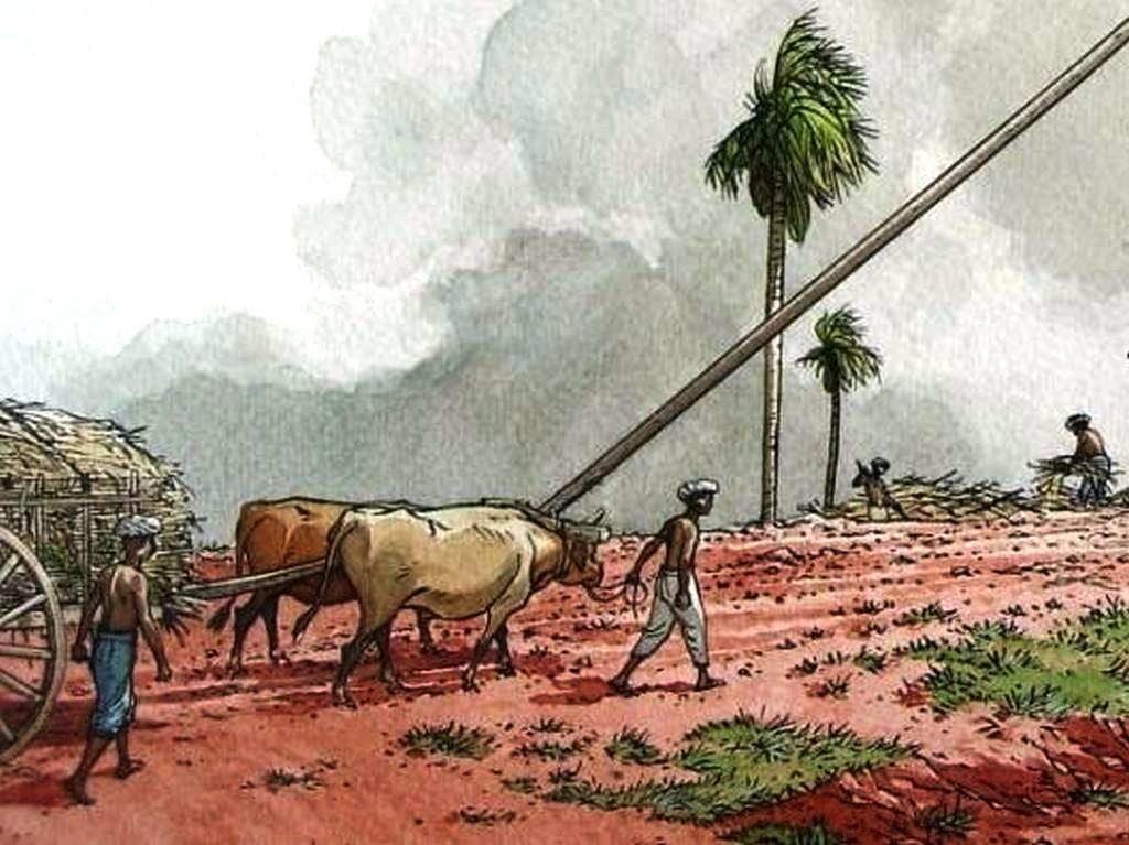 La récolte et le transport de la canne à sucre. Dessin Patrice Pellerin.